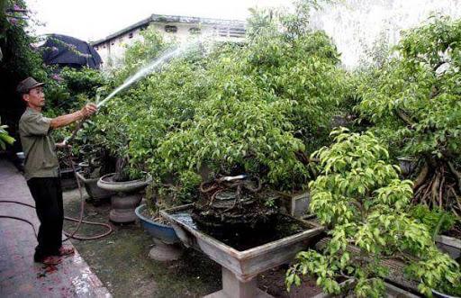 03 sai lầm khi tưới cây cảnh bonsai