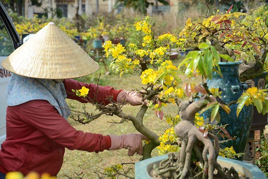 Gia Lai: Nở rộ dịch vụ chăm sóc cây cảnh sau Tết