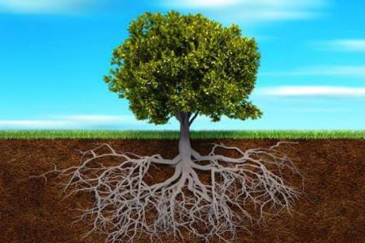 Tất tần tật về cách sử dụng thuốc kích rễ bạn nên biết - Cây Cảnh