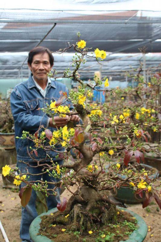 Tạo dáng cho mai vàng, 'vua' mai bonsai Bình Định thu tiền tỷ mùa Tết | -  Agrinews