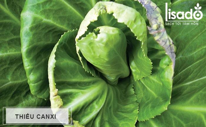 Thiếu Canxi (Ca) trên rau ăn lá