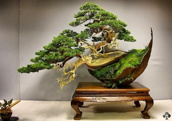 Kỹ thuật lão hóa cây cảnh: lão hóa vỏ cây